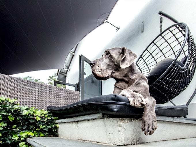 Texstyleroofs-zeildoek-terras-overkapping-op-maat-ultieme-terrasbeleving-hond